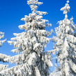 Winter spruces tops — Stock Photo #4502807