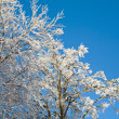 Hoarfrost on tree — Stock Photo