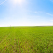 Spring field morning panorama with blue sky and sunshine — Stock Photo