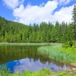 Summer mountain forest lake — Stock Photo #4507619