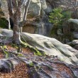 Lofty stones in forest — Stock Photo