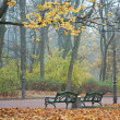 Foggy morning in autumn park — Foto Stock
