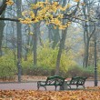 Foggy morning in autumn park — Foto de Stock