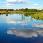 Summer rushy lake — Stock Photo