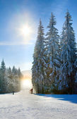 Snow dust dazzle shining on winter skiing slope — Stockfoto