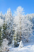 Winter mountain landscape — Stockfoto
