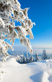 白雪皑皑的冬天风景 — 图库照片