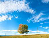 Lonely autumn tree on sky background — Stock Photo