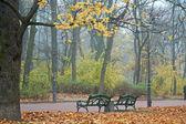 туманное утро в осенний парк — Стоковое фото