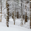 Winter forest — Stock Photo #4527945