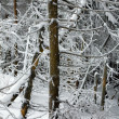 The depths of the winter forest — Stock Photo