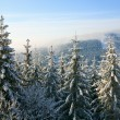 Stock Photo: Winter spruces in mountain