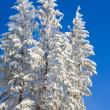 Winter spruces tops and snowfall on sky background — Stock Photo #4528097