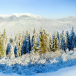 Stock Photo: Winter mountain landscape (panorama)