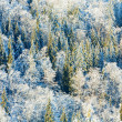 Royalty-Free Stock Photo: Winter forest background