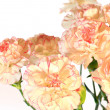 Stock Photo: Yellow-pink carnation flowers