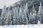 Winter mountain landscape — Foto Stock