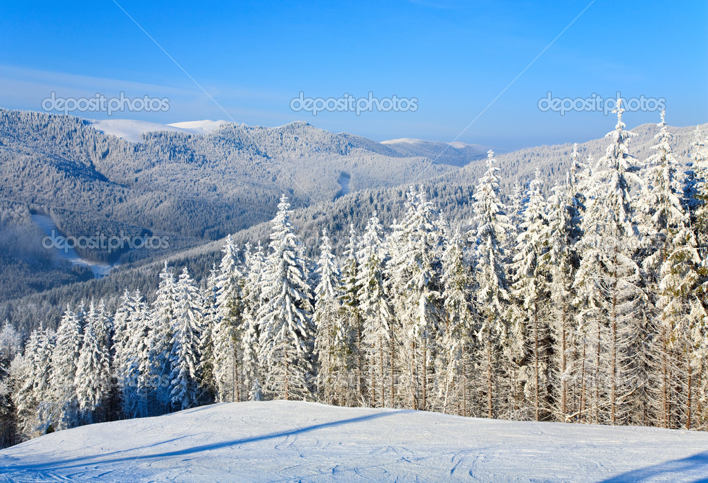 Winter calm mountain landscape with rime and snow covered spruce trees (view from Bukovel ski resort (Ukraine) to Svydovets ridge) — Stock Photo #4528019
