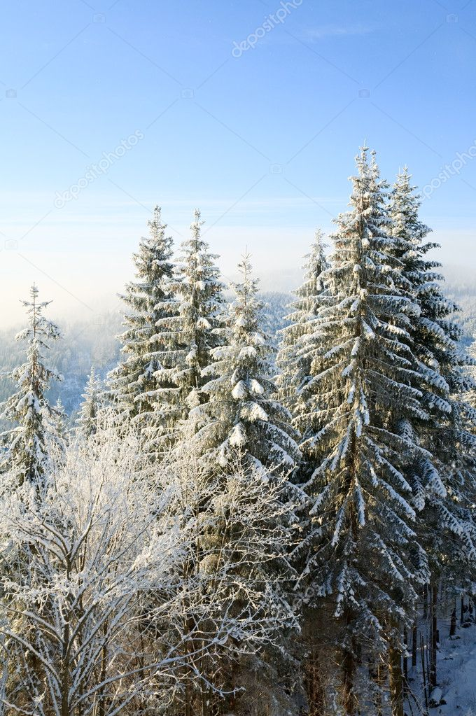 Winter calm mountain landscape with rime and snow covered spruce trees and some snowfall — Stock Photo #4528038