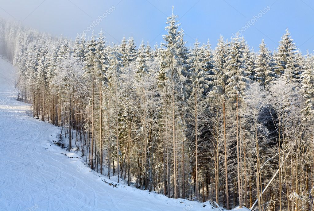 Winter misty mountain landscape with snow covered spruce trees — Stock Photo #4528068