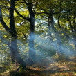Haze in autumn forest — Stock Photo