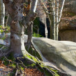 Lofty stones in forest — Stock Photo #4533565