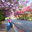 Pink japanese cherry blossom and happy family — Stock Photo