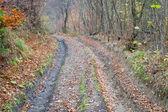 Höstens smutsiga bergsväg — Stockfoto