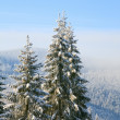 Winter spruces in mountain - Stockfoto