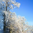 Rime covered trees in winter mountain — Stock Photo #4543517