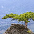 Tree on rocks top — Stock Photo #4545501