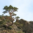 Tree on rocks top — Stock Photo #4545505