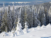 Winter mountain landscape — Stok fotoğraf