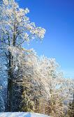 Arbres couvert de givre en montagne hiver — Photo