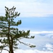 Pine tree — Stock Photo #4552060