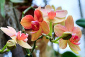 Orchid flowers twig — Stock Photo