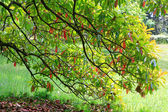 Green-red tree foliage in spring park — Stock Photo