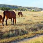 Horses on meadow — Stock Photo #4564834