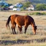 Horses on meadow — Stock Photo #4564836