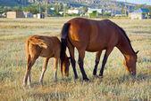Cavalli sul prato — Foto Stock