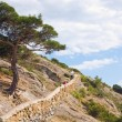 Stock Photo: Juniper tree