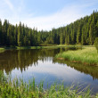 Summer mountain forest lake — Stock Photo #4577807