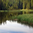 Summer mountain forest lake — Stock Photo #4577811