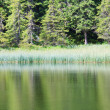 Summer mountain forest lake — Stock Photo