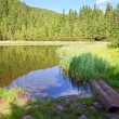 Summer mountain forest lake — Stock Photo #4577880