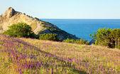 Blumen an Küste — Stockfoto