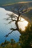 Tree and coast — Stock Photo