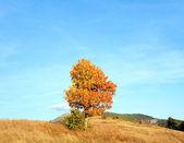 寂寞秋天一棵树上晚上喀尔巴阡山. — 图库照片