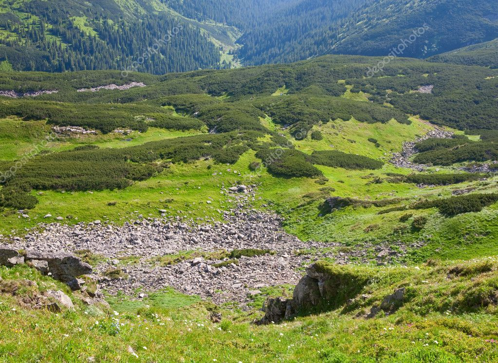 Green wood of coniferous trees and stones on summer mountainside (Ukraine, Carpathian Mountains)  Stock Photo #4576729