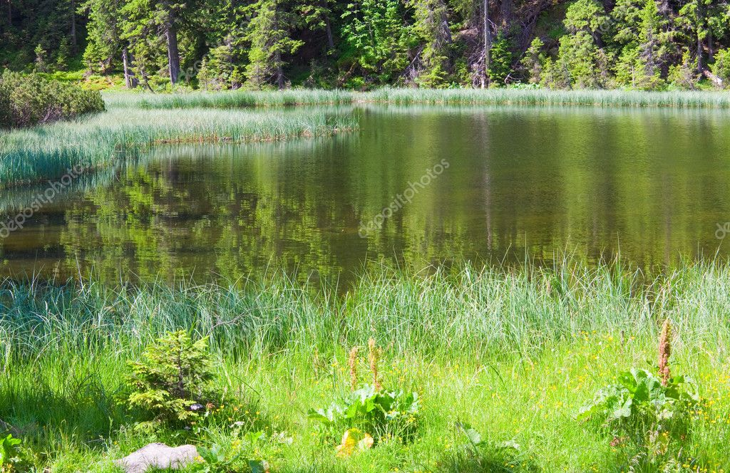 Summer mountain lake Marichejka and fir forest reflection (Ukraine, Chornogora Ridge, Carpathian Mountains) — Stock Photo #4577830